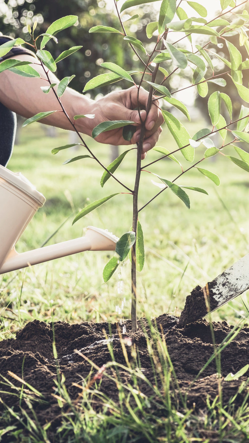 THE COMMUNITY INVESTMENT GUARANTEE POOL (CIGP) — two people planting a tree